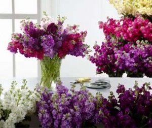 Anyák napja – küldj Viola virágcsokrot biztonságosan